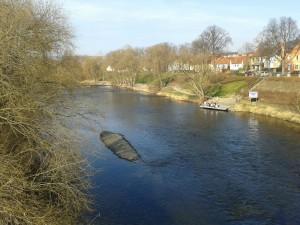 Blick von der Camsdorfer Brücke auf das Saale-Ufer